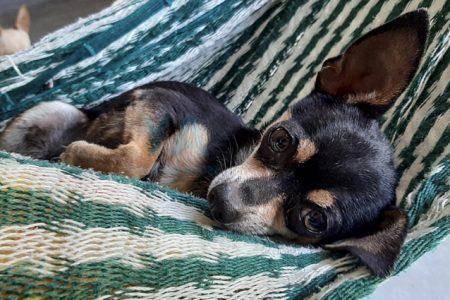 Purina en Yucatán ofrece cuidar mascotas de médicos y enfermeras durante contingencia
