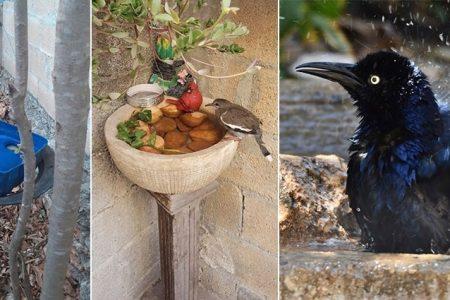 Dales de beber a las aves y gana premios ecológicos