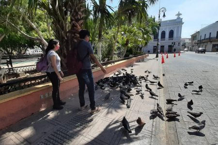 Se espera para el 25 de junio el fin de la pandemia en México