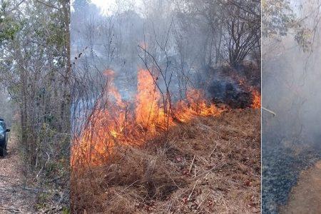 Surge el primer incendio mayor: afecta Quintana Roo y el sur de Yucatán