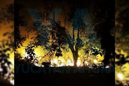 Extraño incendio en un predio de la Cortés Sarmiento