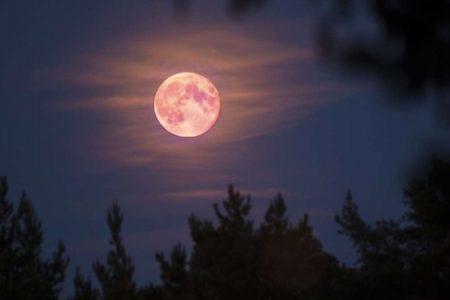 Alza la vista y mira esta noche la hermosa Luna rosa de abril