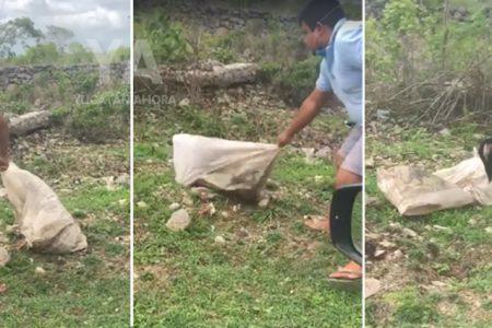 Liberan a un perrito abandonado dentro de un costal en el monte