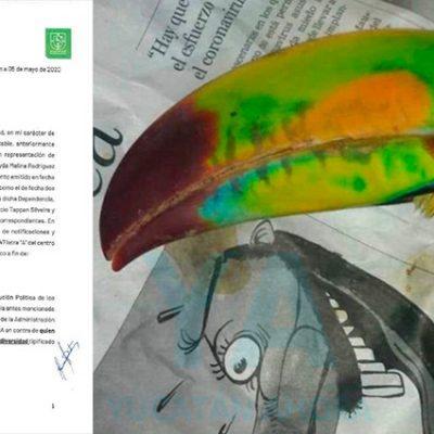 Interponen denuncias ante Profepa y la Fiscalía por la muerte del tucán de Francisco de Montejo