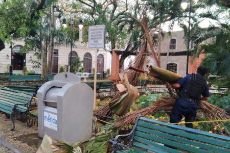 Fuerte lluvia derriba árboles, cables y hasta un tinaco en el centro de Mérida