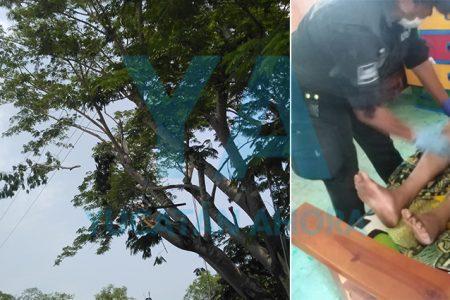 Sufre descarga eléctrica podando un árbol y cae de una altura de siete metros