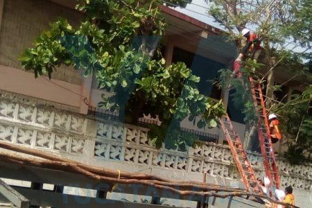 Se electrocuta adolescente subcontratado por la CFE para podar árboles