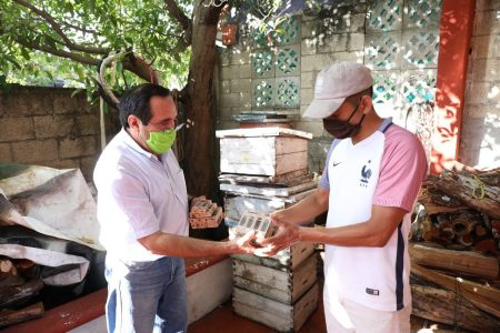 Entregan abejas reinas a apicultores de Yucatán