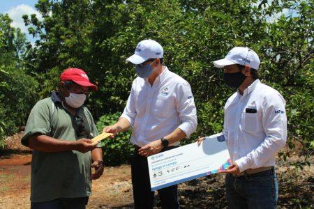 Productores yucatecos de cítricos de 11 municipios reciben apoyos económicos