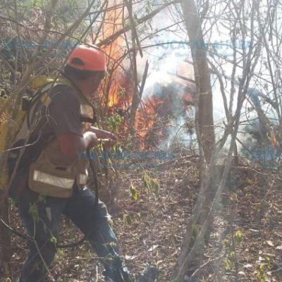Lluvias, aliadas en el combate a incendios