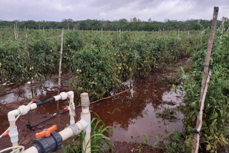 Cristóbal y ondas tropicales aniquilan la sequía en la Península de Yucatán
