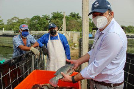 Entregan pescado a familias yucatecas vulnerables en la pandemia de Covid-19