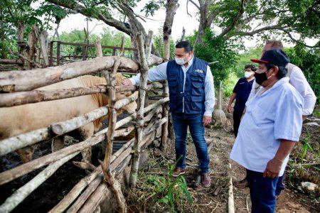 En Mérida el campo también resultó gravemente dañado por la tormenta Cristóbal