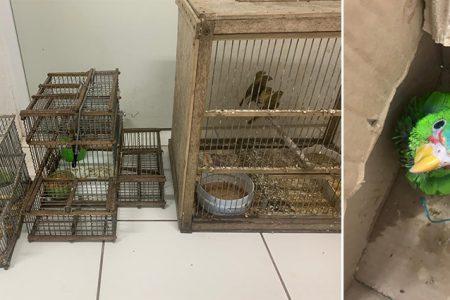 Identifican aves que tenía traficante tizimileño: las resguardan en Animaya