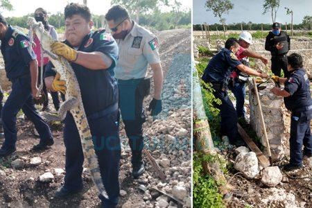 Encuentran un cocodrilo junto al parque acuático Río Salvaje
