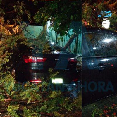 Cae un árbol de Flamboyán sobre un auto en Mulsay