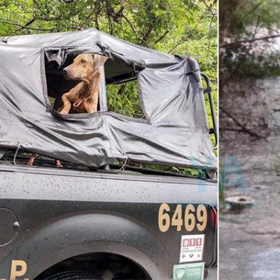 Rescatan un perro atrapado por las lluvias de Cristóbal