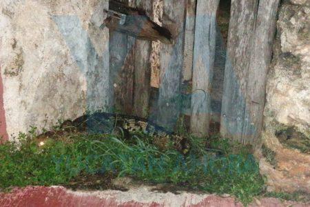 Siguen aprovechando el relajo de Cristóbal: escapa cocodrilo del zoológico La Reina