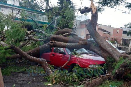 Flamboyán aplasta un Tsuru en Villas de Sol