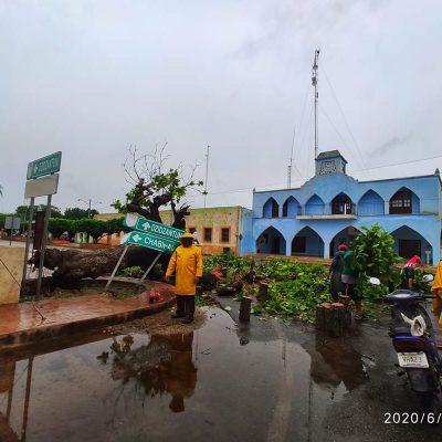 Lluvias de Cristóbal tumban otro centenario árbol: ahora en Yobaín