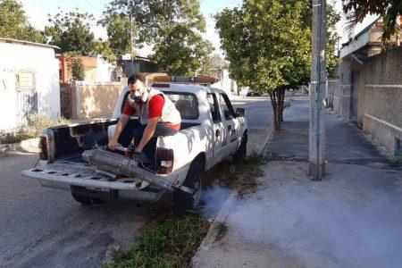 Tras las lluvias de Cristóbal, ahora el combate es contra el mosco