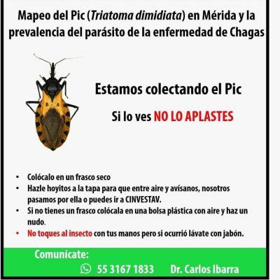Mérida, modelo de estudio del 'pic' o chinche besucona, vector del mal de Chagas