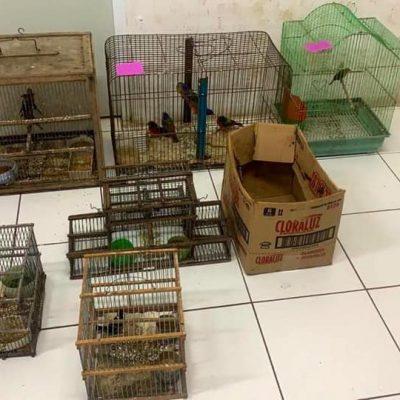 Más tardó la detención de un traficante de aves; lo liberaron horas después