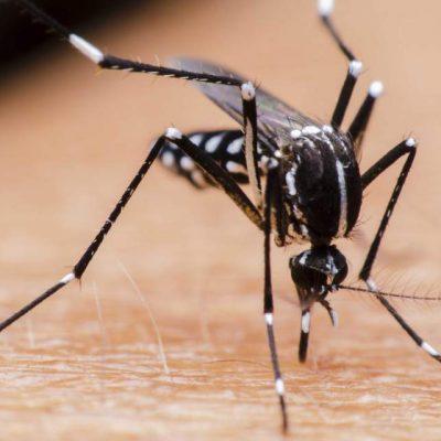 Alto el riesgo de propagación de dengue para este año en Yucatán: IMSS