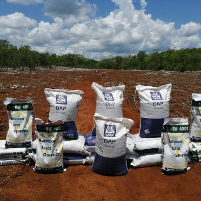 Comienza la distribución de semillas de maíz e insumos para impulsar al campo