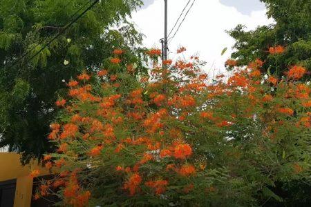 Regresan las mariposas a Mérida: ¡gracias Cristóbal!