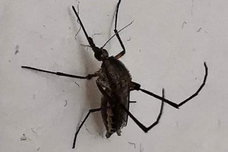"Pican fuerte, pero ningún mosco que ""trajo"" Cristóbal transmite dengue"