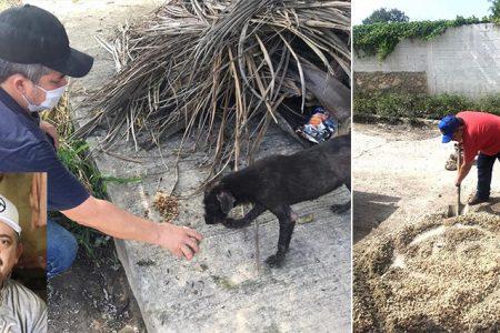 No solo dona comida y despensas; carnicero alimenta perros callejeros y bachea en Kanasín