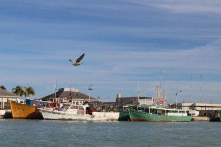 Por Covid-19, no permitirán la entrada de pescadores de fuera para la temporada de pulpo
