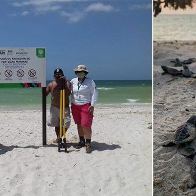 Profepa vigila la costa yucateca para proteger tortugas en temporada de anidación