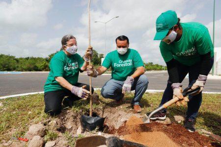 Acciones a favor del medio ambiente, firmes en Mérida pese al Covid-19