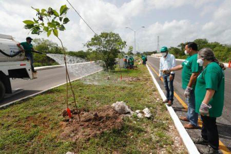 La Cruzada Forestal 2020 a punto de llegar a la meta de este año: Renán Barrera