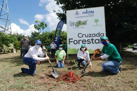 Concluye la Cruzada Forestal 2020: Mérida ya cuenta con 20,000 árboles más