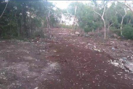 Triste regalo para la Reserva Cuxtal en su 27 aniversario: arrasan con selva en sus entrañas