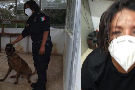 Valiente oficial femenina rescata a perro atado a un árbol, atacado por abejas