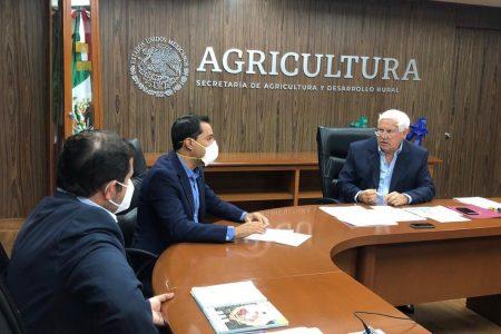 Gobierno Federal admite que no tiene recursos para ayudar a los campesinos yucatecos