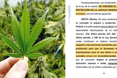 Joven obtiene amparo en Yucatán para consumir marihuana de uso lúdico