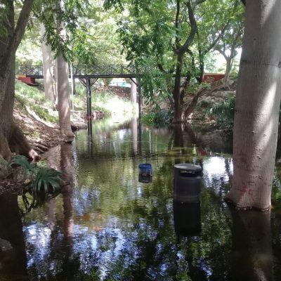 El Parque Hundido del Poniente, otro espacio que recupera la naturaleza