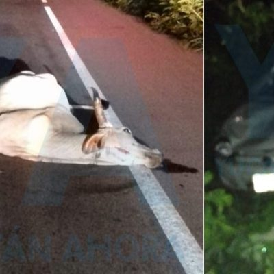 Se atraviesa una vaca en su camino: terminan en el monte