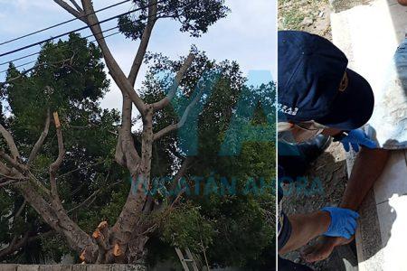 Jardinero hospitalizado: le cayó encima una rama del árbol que podaba