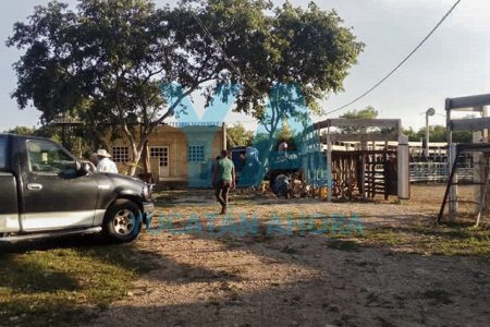 Sin temor al Covid-19, organizan corrida de toros en Tetiz; policía la cancela