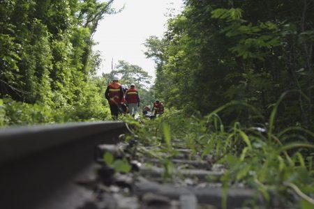 El Tren Maya incluirá pasos de fauna para evitar muertes por animales atropellados