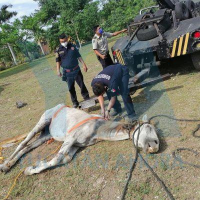 Rescatan una yegua que cayó a profunda zanja en Chichí Suárez