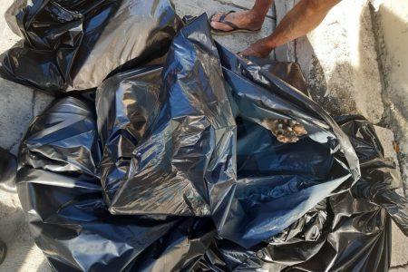 Envenenan ocho perros que vivían en el techo de una casa en Jardines de Mulsay