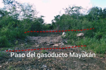 Denuncian que siguen los desmontes furtivos en la Reserva Cuxtal