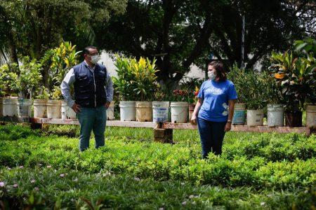 Renán Barrera visita el lugar donde se cultivan los pulmones de Mérida
